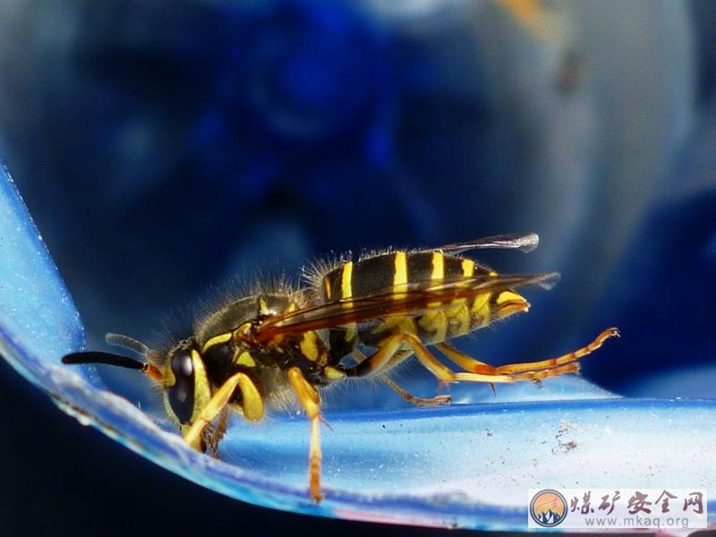 可爱的科学范建国摄影作品恐龙蜜蜂绘本